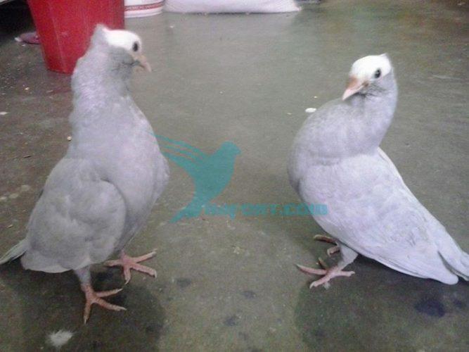 One pair silver muki ringred baby low kobutor price