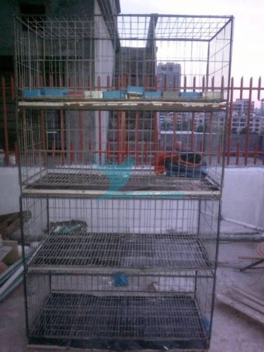 pigeon case