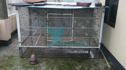 Big Iron pigeon Cage for sale